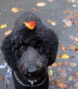 Atticus wears a leaf hat in NJ, 2012