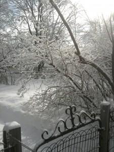 St Paul Snow Beauty
